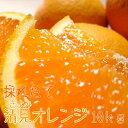 【ふるさと納税】清見オレンジ10kg【お届け指定日不可】