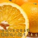 【ふるさと納税】有田の八朔7.5kg【1月下旬〜お届け】