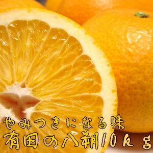 【ふるさと納税】有田の八朔10kg【1月下旬〜お届け】