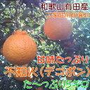 【ふるさと納税】不知火(デコポン)5kg【お届け指定日不可】