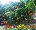 ショッピングみかん 【ふるさと納税】久幸園 完熟清見オレンジ 6kg