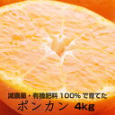 【ふるさと納税】特別栽培 ポンカン4kg【発送時期指定可】【...
