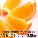 【ふるさと納税】特別栽培 清見オレンジ3.5kg【発送時期指...