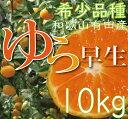 【ふるさと納税】濃厚な味わいゆら早生みかん10kg【10月上...