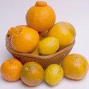【ふるさと納税】<3月発送>有田の柑橘詰合せ3.5kg