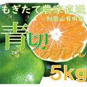 【ふるさと納税】爽やかな味わい青切りみかん5kg【9月中旬よ...