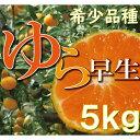 【ふるさと納税】濃厚な味わいゆら早生みかん約5kg【10月上旬より発送】希少品種《有機質肥料100%》