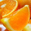 【ふるさと納税】厳選!!濃厚清見オレンジ 約4kg