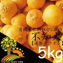 【ふるさと納税】春柑橘こだわりの不知火(通称デコポン)和歌山...