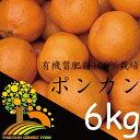 【ふるさと納税】春柑橘こだわりのポンカン和歌山産 6kg