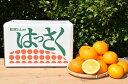 【ふるさと納税】和歌山産 有田のはっさく 10kg L・2L...