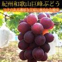 紀州有田産の巨峰ぶどう約2kg※2020年8月下旬〜9月中旬頃に順次発送予定