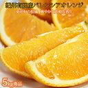 【ふるさと納税】秀品 希少な国産バレンシアオレンジ 5kg※2021年6月下旬~7月中旬頃に順次発送予定