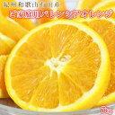 【ふるさと納税】【ご家庭用訳あり】希少な国産バレンシアオレンジ 7kg※2021年6月中旬頃~7月上旬頃に順次発送※着日指定不可