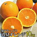 【ふるさと納税】果汁たっぷり!清見オレンジ 約10kg 有機質肥料100% ※2022年3月上旬より順次発送予定(お届け日指定不可)