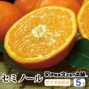 【ふるさと納税】セミノールオレンジ 約5kg/サイズおまかせ ※2021年4月中旬~5月上旬頃に順次発送予定(お届け日指定不可) 紀伊国屋文左衛門本舗
