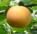 【ふるさと納税】279 あきづき (5キロ)フルーツ 果物 梨 なし ナシ 送料無料