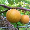 【ふるさと納税】268 新甘泉(秀品(2.5キロ)たさき農園...