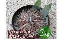 【ふるさと納税】【E-31】鳥取県岩美産 生ほたるいか
