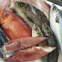 【ふるさと納税】鮮魚セット