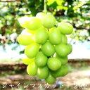 【ふるさと納税】シャインマスカット 2kg【9月〜10月初旬...