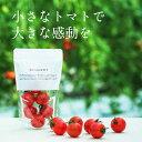 【ふるさと納税】 MINORI 3パックセット フルーツトマト トマト アイメック 甘い
