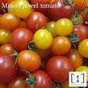 【ふるさと納税】 MINORI ジュエル トマト(Minori Jewel tomato)【10月中旬以降発送】 フルーツトマト トマト アイメック 甘い