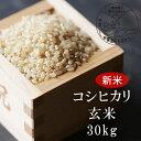 【ふるさと納税】<令和3年産・新米>G31 おおがや米 コシヒカリ 玄米30kg