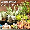 【ふるさと納税】多肉植物特選アソートセット 【花・苗木・多肉...