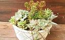 【ふるさと納税】多肉植物オリジナル寄せ植え 【花・苗木】