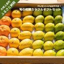 【ふるさと納税】大崎上島産〈11~12月発送〉島の宝石箱!旬の柑橘カラフルギフトセット