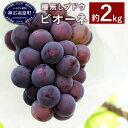 【ふるさと納税】数量限定 種無しぶどう ピオーネ 約2kg 葡萄 ブドウ 広島県産 送料無料