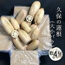【ふるさと納税】3A002a 【久保の蓮根】4kg入り 「大小バラ」 徳島県産