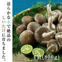 【ふるさと納税】菌種や自然栽培にこだわった岡本さんちの生しいたけ 4袋(200g×4)