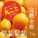 【ふるさと納税】皮ごと丸かじり!さなごうちフルーツ金柑 1kg