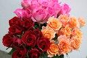 【ふるさと納税】OKM02 日本一に輝いた阿波のバラをお届け...