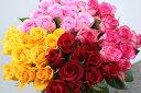 【ふるさと納税】OKM03 日本一に輝いた阿波のバラをお届け...