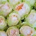 【ふるさと納税】OKM07 最高級のバラ「ゴッドマザー」! ローズガーデン徳島 ゴッドマザー10本