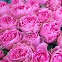 【ふるさと納税】OKM05 ジャパンフラワーセレクションで日本一に輝いた最高級のバラ「さざ波」! ロ...