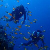 【ふるさと納税】KNP04 水着1つでお越しください!徳島最南端の海でファンダイビング!の画像
