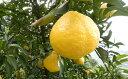 【ふるさと納税】はるか家庭用 2kg 【柑橘類・フルーツ・果物・みかん・ミカン】 お届け:2019年...