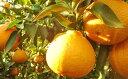 【ふるさと納税】特選24玉 しらぬひ(露地) 【不知火・柑橘類・フルーツ・果物】 お届け:2019年...