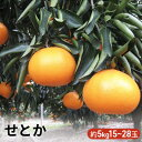【ふるさと納税】せとか 5kg 【果物類/みかん・柑橘類/フルーツ 】 お届け:2020年2月上旬〜...