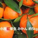 【ふるさと納税】香川県オリジナル品種 小原紅早生みかん 5k...