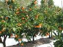 【ふるさと納税】温州みかん 5kg 【果物類/みかん・柑橘類...