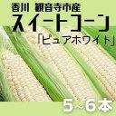 【ふるさと納税】スイートコーン ピュアホワイト 5〜6本 【野菜・とうもろこし 】 お届け:2020年6月中旬〜7月中旬