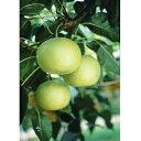 【ふるさと納税】ホウナンの梨(二十世紀梨) 【果物・フルーツ...