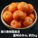 【ふるさと納税】フジカワ温州みかん 5kg 【フルーツ・果物類・みかん・柑橘類】 お届け:2020年...