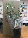 【ふるさと納税】【高級】インテリアに最適の観葉植物!!香川県...
