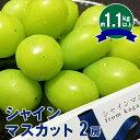 【ふるさと納税】シャインマスカット 2房(1.1kg以上) ...